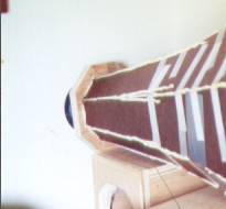 horndetail.jpg